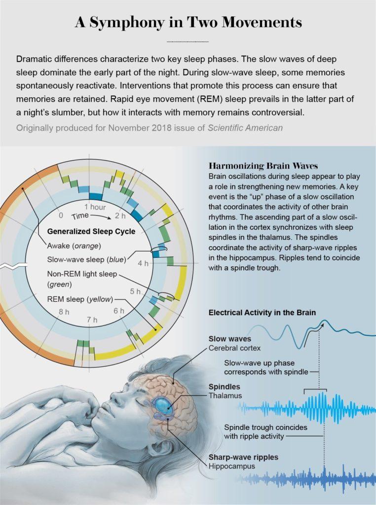 Impulsos eléctricos durante el sueño